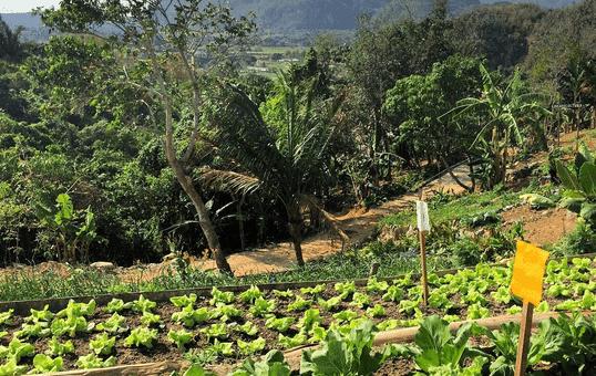 Pogoda na Kubie – kiedy jechać