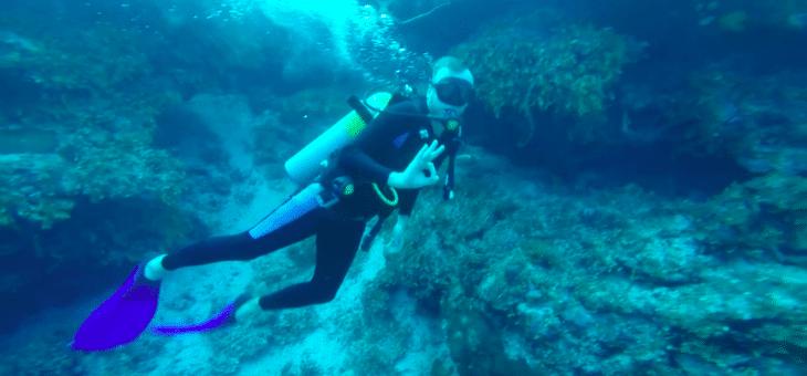 Nurkowanie na Kubie – jaskinie, czarne koralowce i rekiny