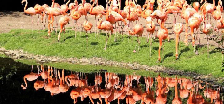 12 najlepszych atrakcji przyrodniczych na Kubie